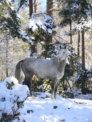 Astrix-i-Snøen