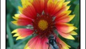 blomst_og_flue