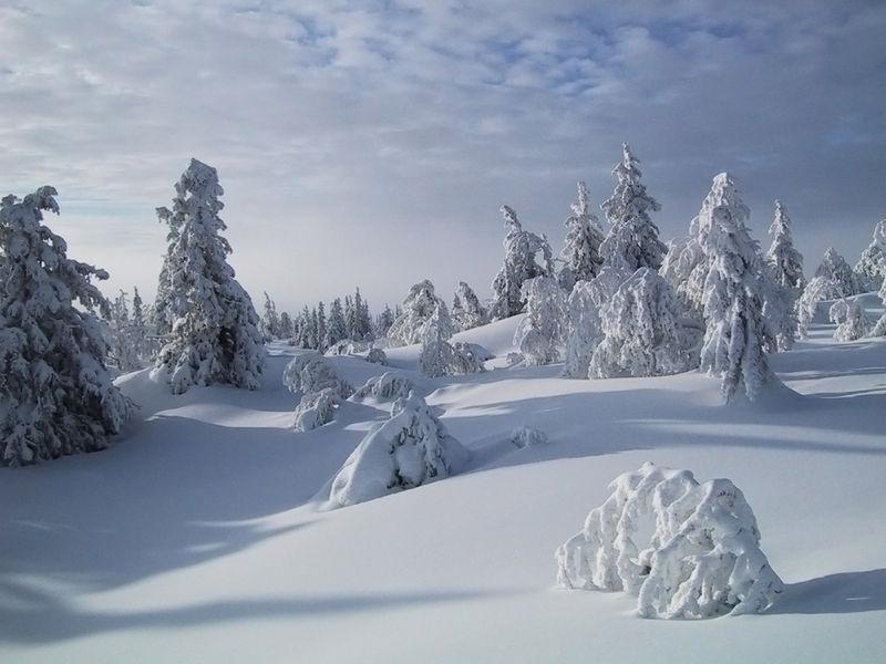 Vinter for mennesker og dyr. Foto: Jørgen Skaug