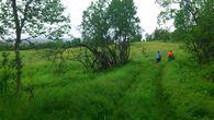 gammel skogsvei.