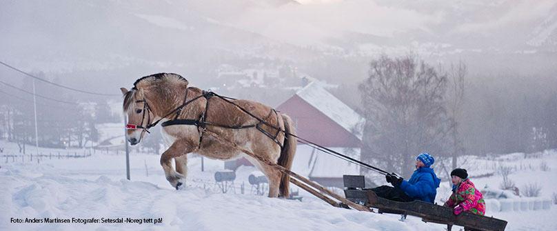 hest-og-slede