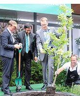 Dr. Rajendra K. Pachauri, leder av FNs Klimapanel, flankert av miljø- og klimaminister Tine Sundtoft og Skogeierforbundets adm. dir. Erik Lahnstein plantet et tre under Arendalsuka 2014.