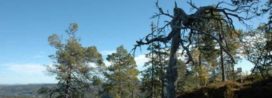 Illustrasjonsbilde av Hevillen naturreservat med trær og utsikt