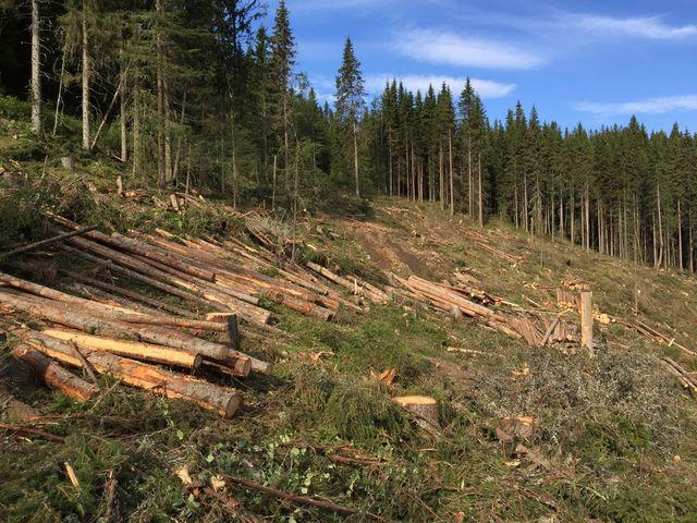 Skogfond