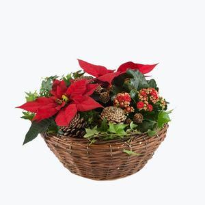 170546_blomster_plante_planter