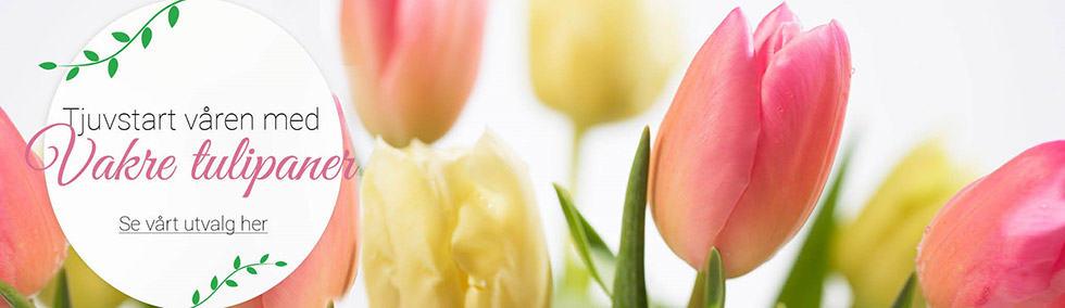 banner_tulipan_butikkweb