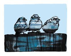 3 blå fugler