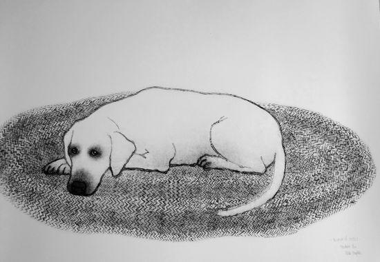 Hunden på teppet – Kopi