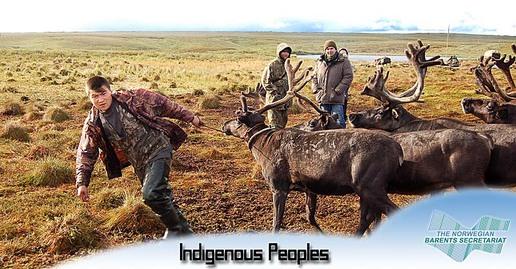 Indigenous Peoples, Kaninskaya Tundra