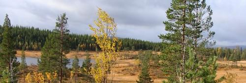 miljø og landbruk, landskap_1000x406