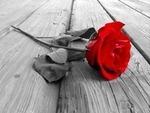 rose_150x113
