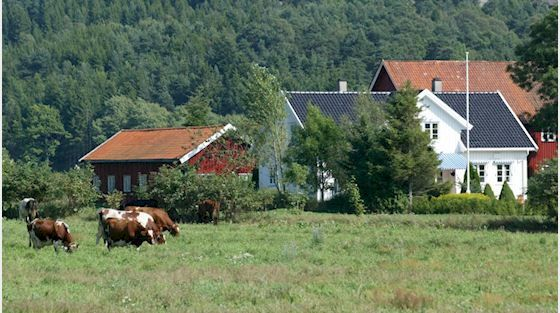 Gårdsbruk