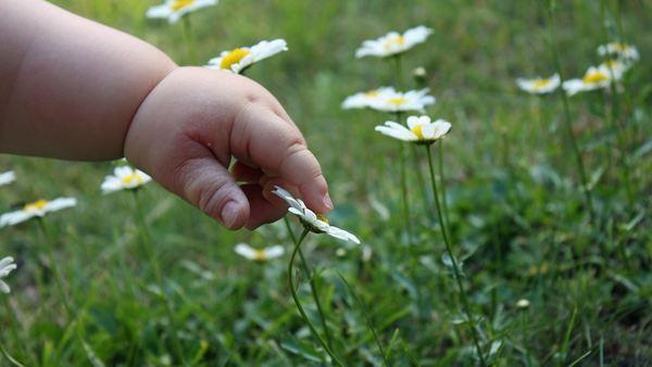 Hand og blomster