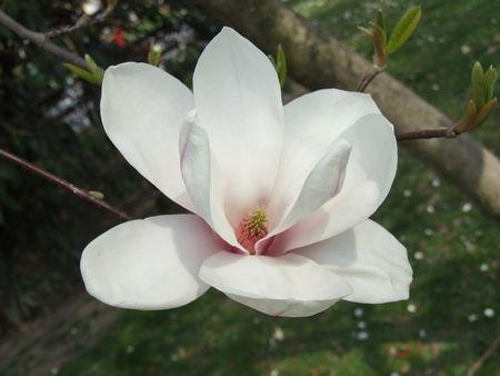 magnolia-1364274-1280x960