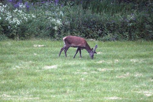 Nye jakttider på elg og hjort i Malvik kommune, Foto: Tor Viken