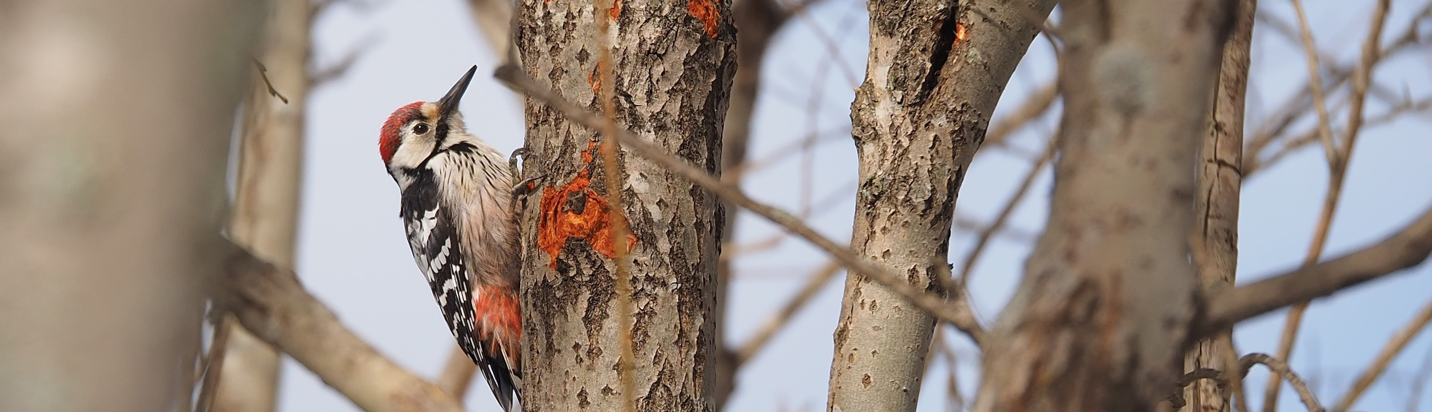 Illustrasjonsbilde - fugl i treet