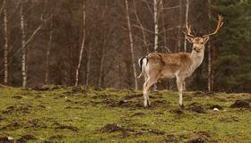Bilde av hjort i utmark