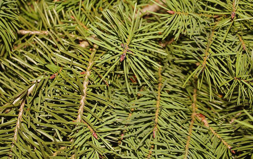 christmas-tree-3029841_960_720