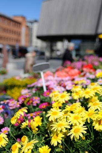 Blomster på Stortorget