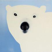 Isbjørn avstand