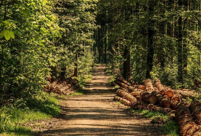 Sti gjennom skogen