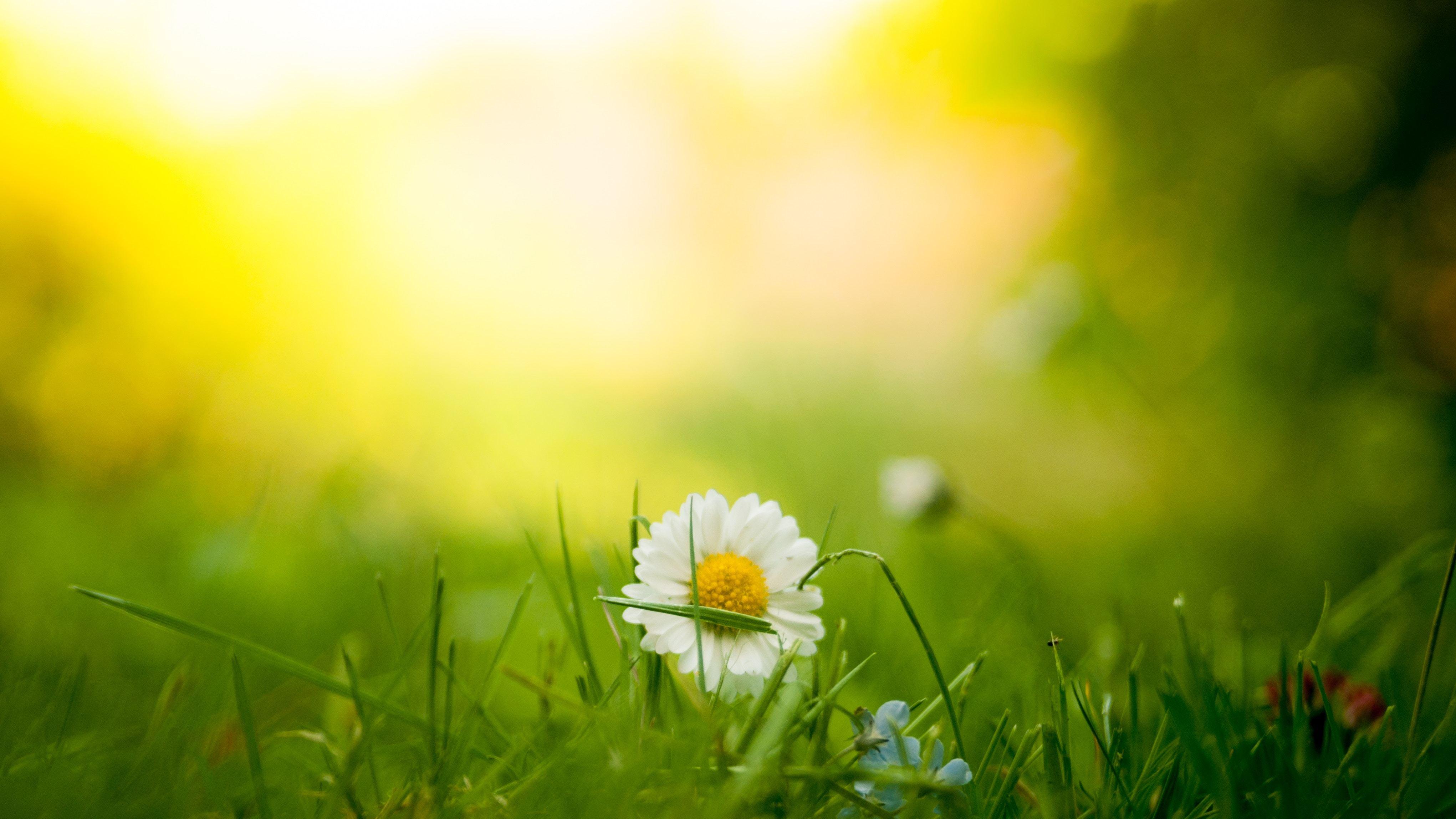 verider - blomst.jpg
