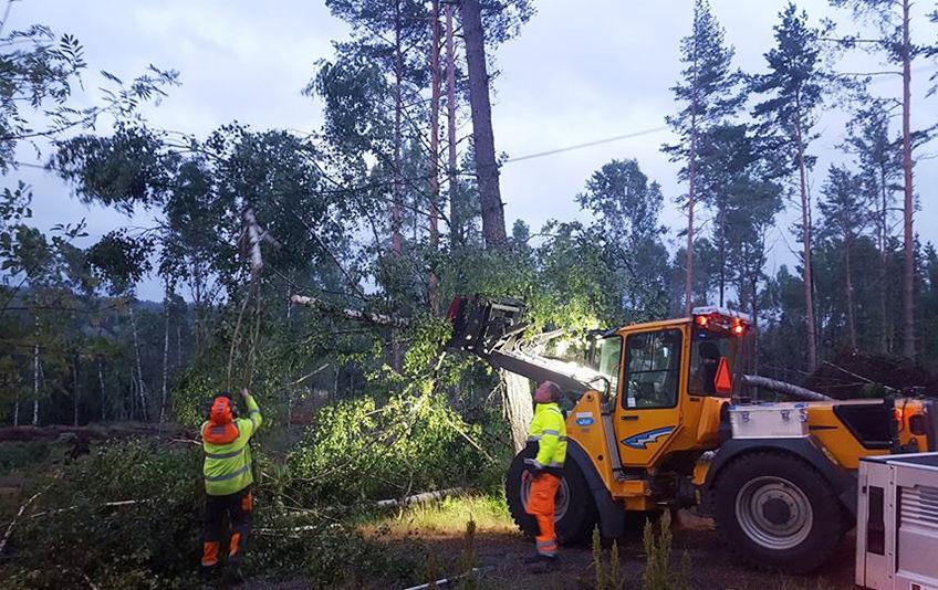 Park rydder trær ved Østli[1]
