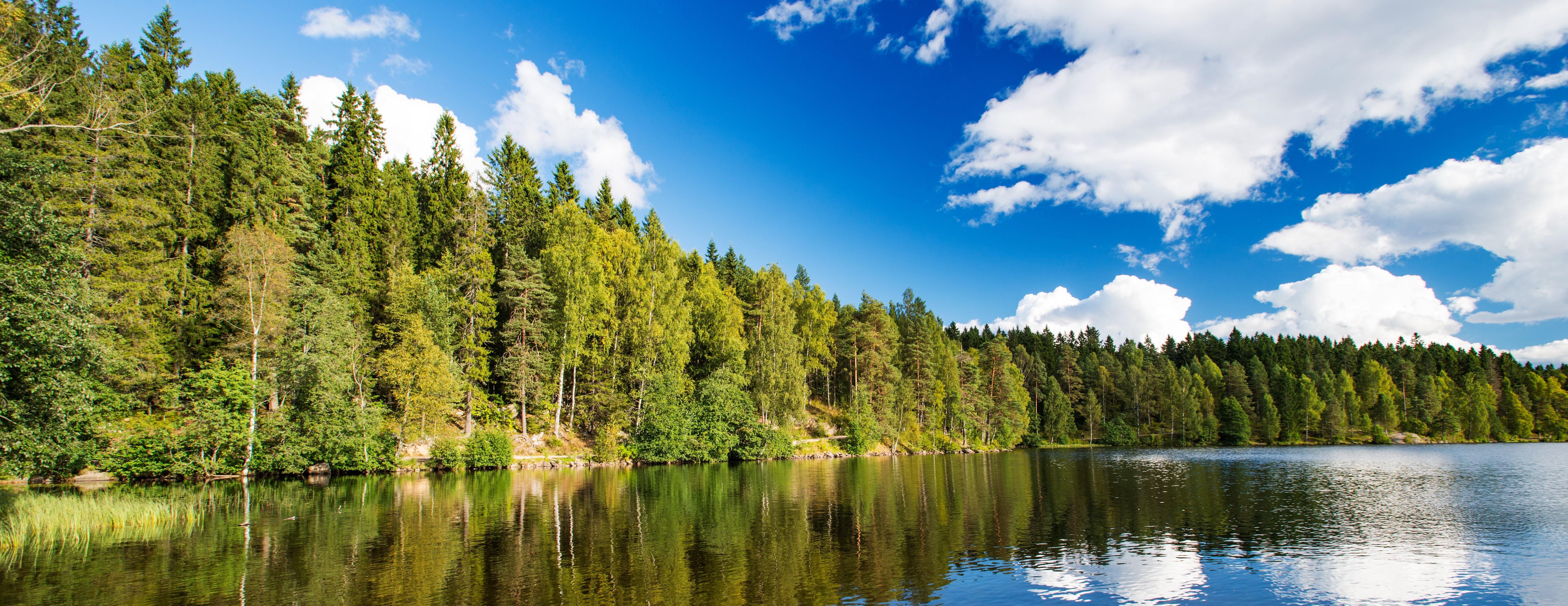 Bilde av innsjø og trær