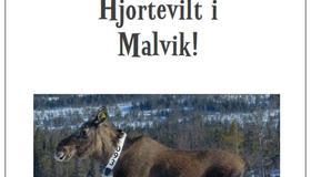Hjortevilt i Malvik 2018