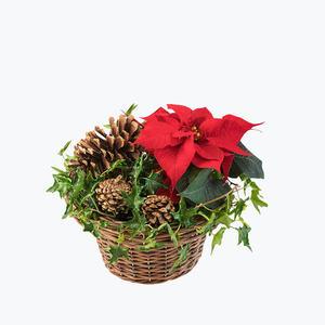 180662_blomster_juleplante