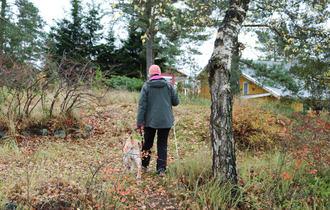 Kvinne går med blindestokk og sin førerhund gjennom lett skog mot et gult bolighus.