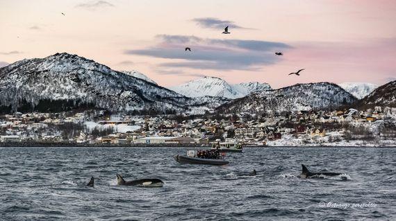 0212-2018-Spekkhogger_turisme_Skjervøya-1571-compressor