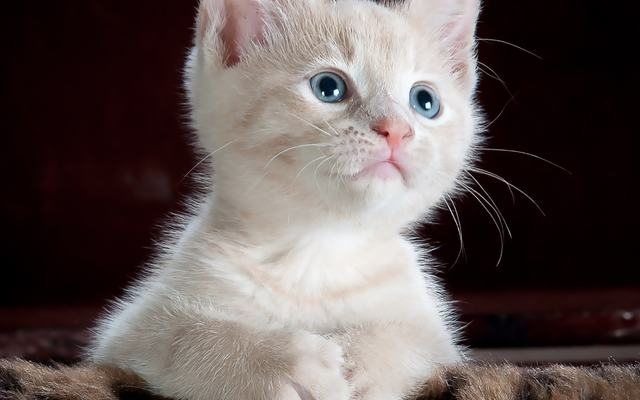Kattebilde