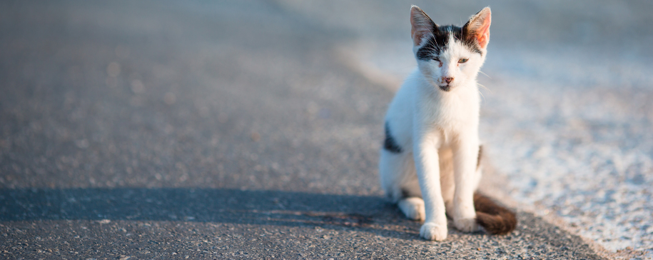 påkjørte katter