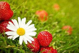 Bilde av jordbær og blomster