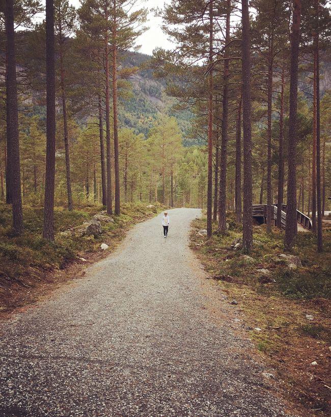 Ein liten vandrar i Hamaren