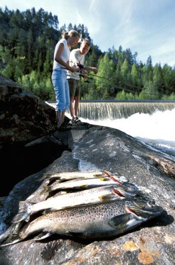 Fiske ved fossen