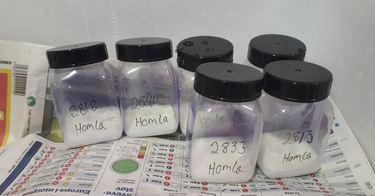 Melkestryking av stamfisk fra Homla