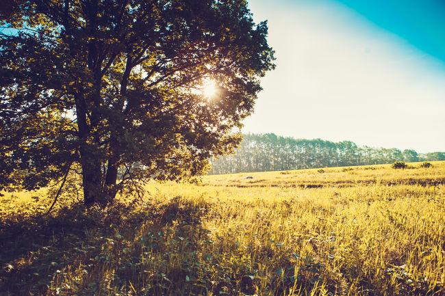 Solfylt morgon på enga