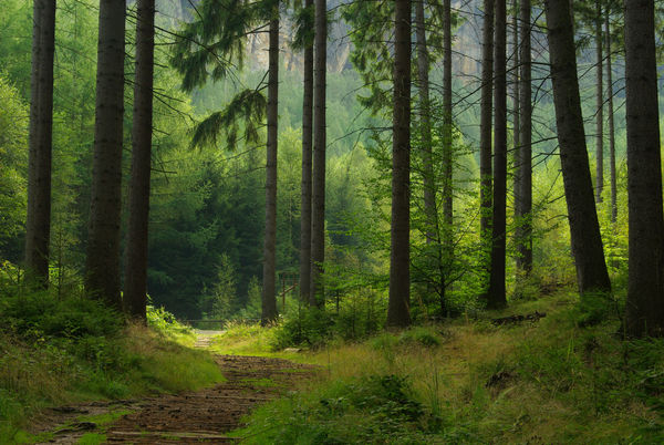 Skog_forest