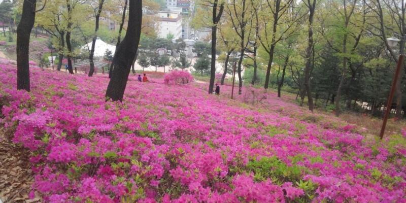 Bucheon (Sør-Korea)