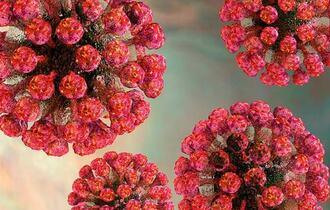 Mikroskopbilde av rubellavirus formet som røde kuler