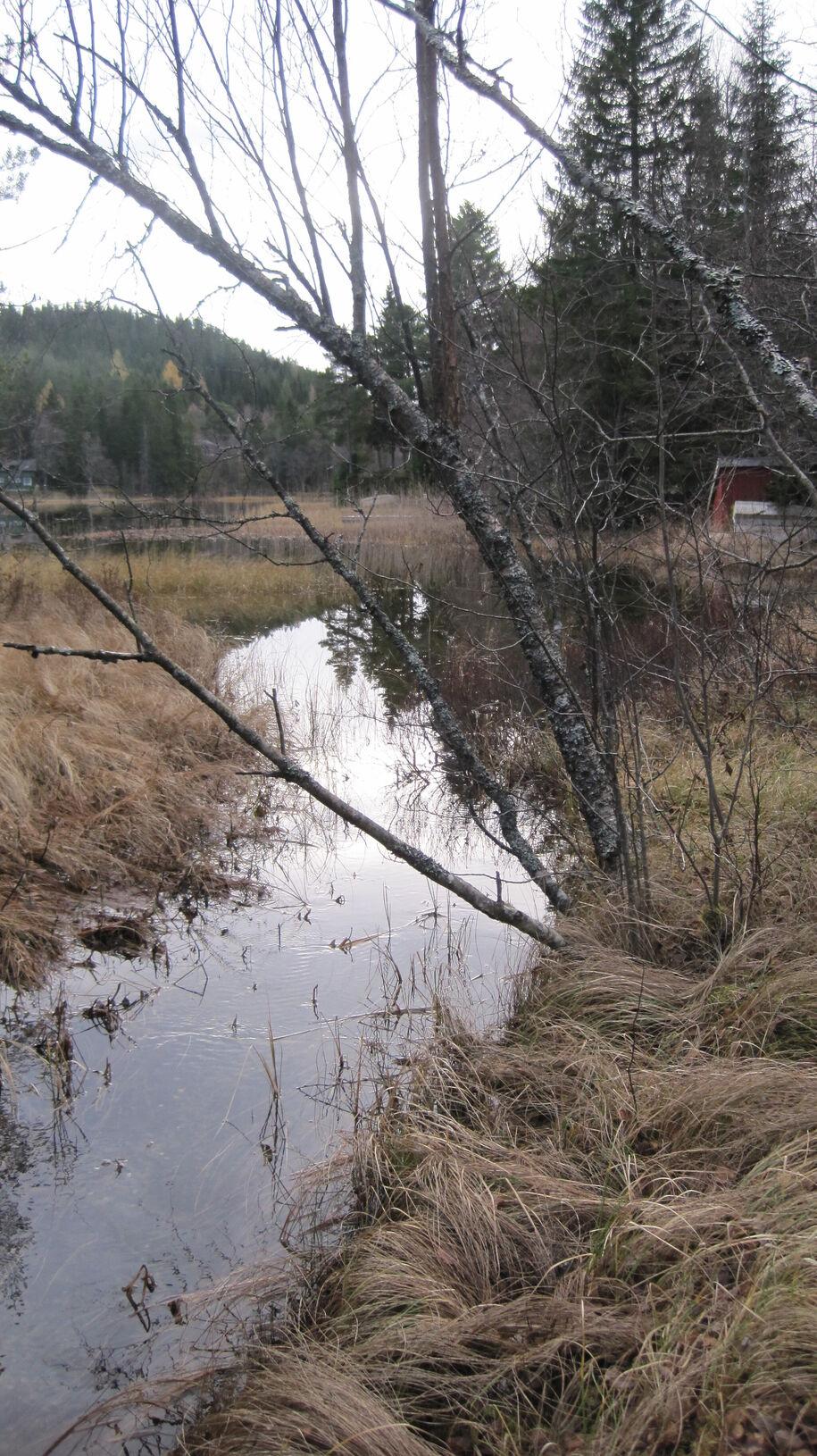 Bilde_PS_Fjølstadbekken_utløp Hestsjøen (1)