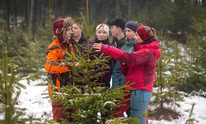 10. klasse ved Gimle plukka ut juletre som dei planta i 2011