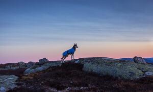 Tur til Tjønnefjell og Reidalsfjell (med hunden min Rot) – flott og koronafritt terreng – vi gjekk heile dagen utan å treffe folk