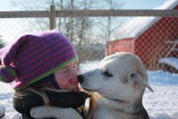 VinterMAlvik,hunder