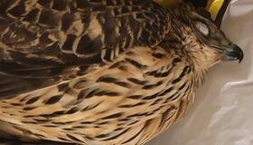 Meld i fra om døde fugler