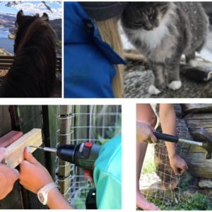 Bildekollasj av dyr og arbeid på en gård