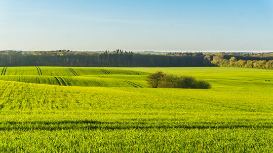 48248815-landscape-with-green-fields-forest-and-hills-in-spring