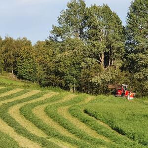 Grashøsting